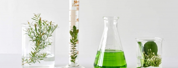 labbeakersandplants